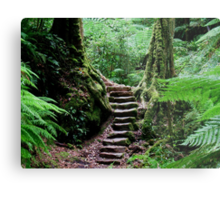 Rainforest Steps Metal Print