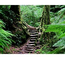 Rainforest Steps Photographic Print