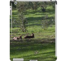 Kangaroos Eltham Victoria Australia 20160802 7263  iPad Case/Skin