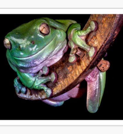 Green Tree Frog and Horseshoe Sticker