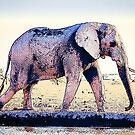 Elephant Walking Along River by Phil Perkins