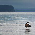 Great Lake Taupo by Peter Kurdulija