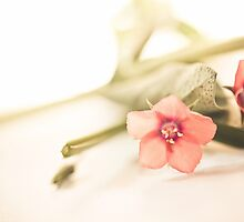 Origanum Flower by lightwanderer