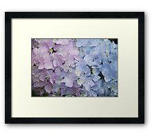 Pink and Blue Framed Print
