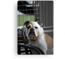 mastiff dog Metal Print