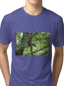 squirrel on the tree Tri-blend T-Shirt