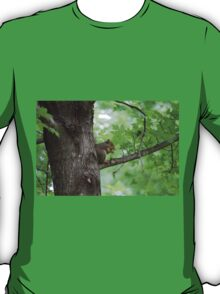 squirrel on the tree T-Shirt