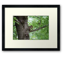 squirrel on the tree Framed Print
