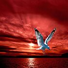 Silver Gull in Orange Red Ocean Sunrise. by sunnypicsoz