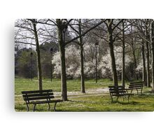 flowery meadow with daisies Canvas Print