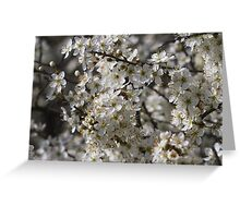 white flowers in spring Greeting Card