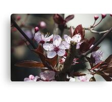 peach flowers Canvas Print