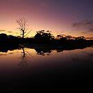 Peggs Creek , North West Tasmania , Australia by phillip wise