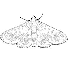 Crambid moth - colour-in design - paint own poster or canvas? Photographic Print