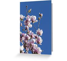 blooming magnolia flowers in spring Greeting Card