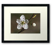 white flowers in spring Framed Print