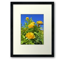Yellow Rose and Bright Blue Sky Framed Print