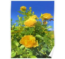Yellow Rose and Bright Blue Sky Poster