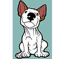 Cheeky English Bull Terrier Lola  Photographic Print