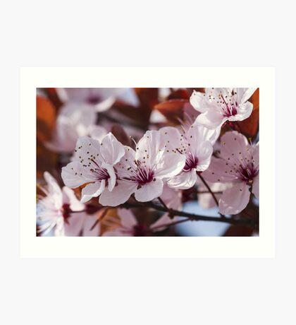 peach blossom in spring Art Print