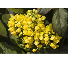 yellow flowers in spring Photographic Print