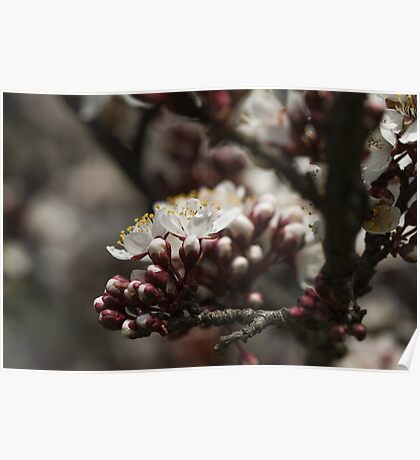 white flowers in spring Poster