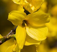 yellow flowers in spring by spetenfia