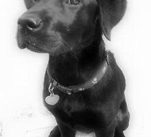 Good Dog by Juno7801