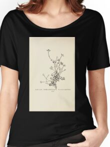 Southern wild flowers and trees together with shrubs vines Alice Lounsberry 1901 156 Thyme Leaved Bluets Women's Relaxed Fit T-Shirt