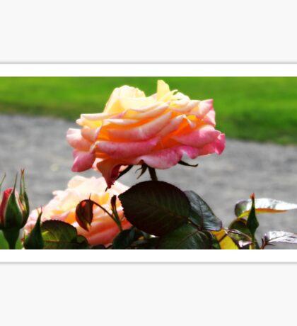 pretty rose Sticker