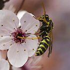 bee on flowers by spetenfia