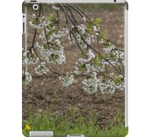 trees with white flowers in spring iPad Case/Skin