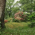 The green gardens of the emerald isle by miradorpictures