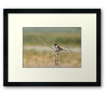 Wildlife of the Burren Framed Print