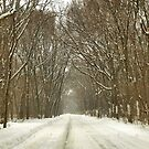Snowy Path At Point Pelee by Barry W  King