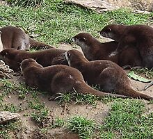 Storytime For Otters by lynn carter