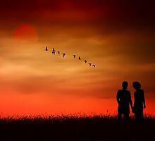 Summer Love by TOM YORK