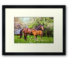 Mother horse with little foal Framed Print