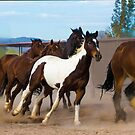 Phyllis's Horses by Linda Gregory