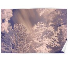 Infrared Trees Poster