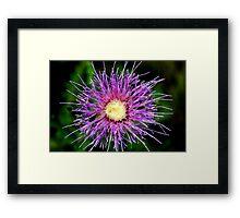 Thistle in Bloom Framed Print