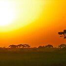 Blazing Serengeti by phil decocco