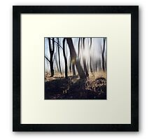 Whispering Trees Framed Print