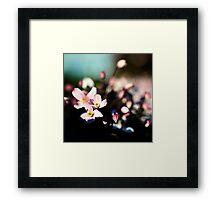 Floral Pinks Framed Print