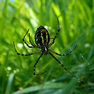 In the web of a spider by jammingene