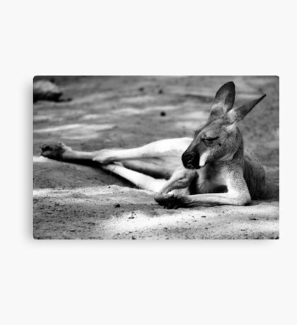 Sleeping Kangaroo Black and White Canvas Print