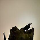 Bird Silhouette  by Cee Neuner