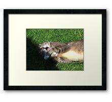 Excited cat Framed Print