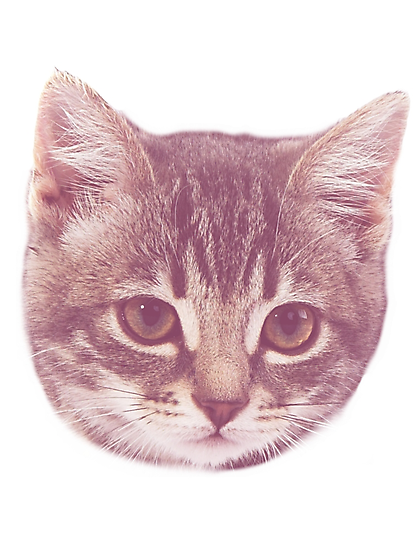 Vintage Kitten  by Odd Clothing