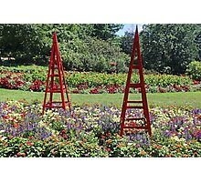 Dow Gardens Sculptures Photographic Print